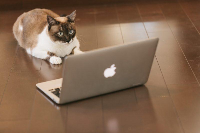 猫エンジニア